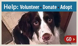 Help: Volunteer, Donate, Adopt